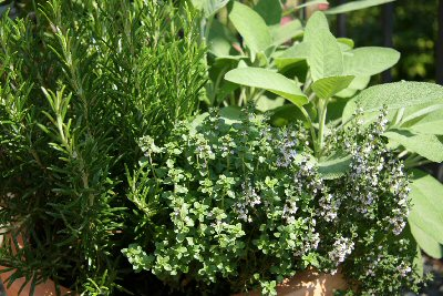 Rosemary, Thyme & Sage, good for aches and pains.